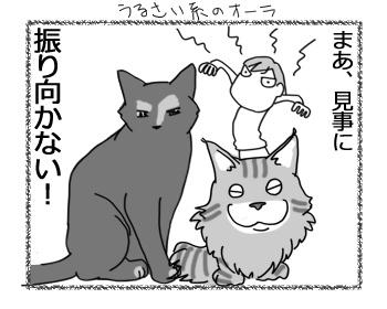 19122016_cat4.jpg