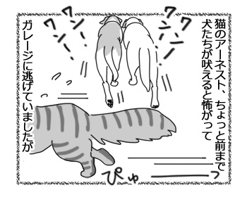 23112016_cat1.jpg