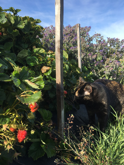 羊の国のビッグフット「猫たち犬たち家庭菜園たち」2