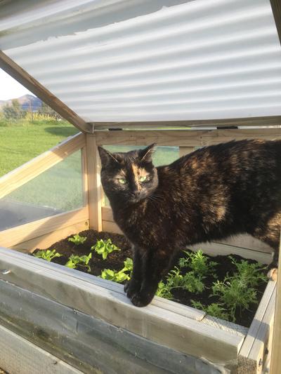 羊の国のビッグフット「猫たち犬たち家庭菜園たち」4