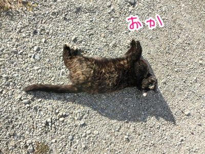 26122016_cat2.jpg