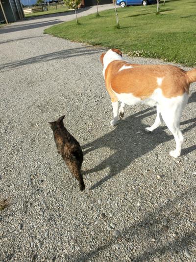 26122016_cat4.jpg