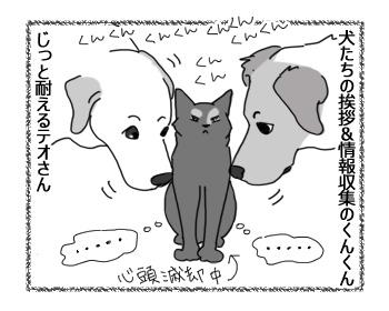 29112016_cat1.jpg