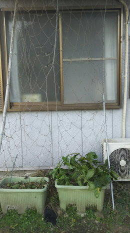 剪定後の窓の様子