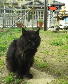 少し長毛の黒猫「ユウ」