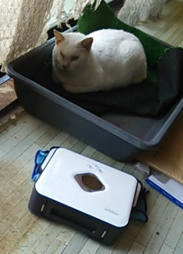 拭き掃除ロボット「ブラーバ」と白猫「しろ」