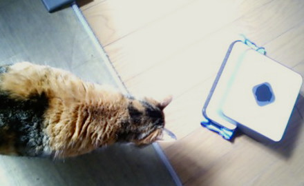 床拭きロボット ブラーバと三毛猫「里」