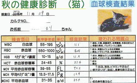 まりの血球検査の結果2016