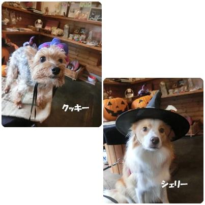 2016-10-3.jpg