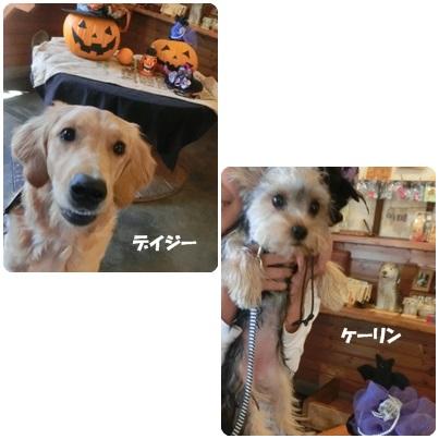 2016-10-68.jpg