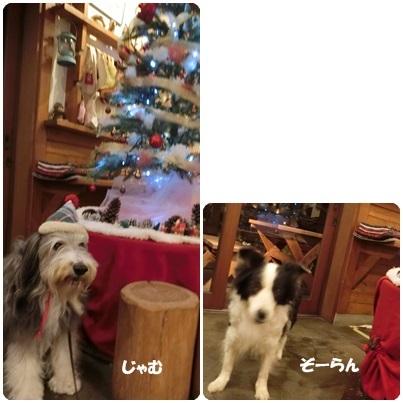 2016-11-99.jpg