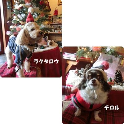 2016-12-111.jpg