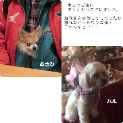 2016-12-117.jpg