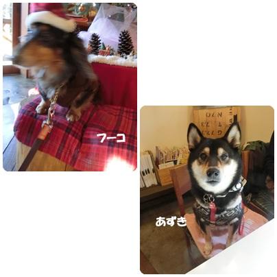 2016-12-136.jpg