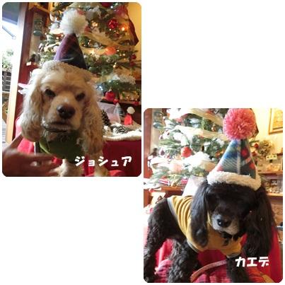 2016-12-15.jpg