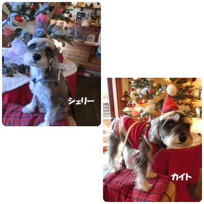 2016-12-151.jpg