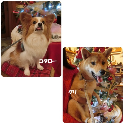 2016-12-156-1.jpg