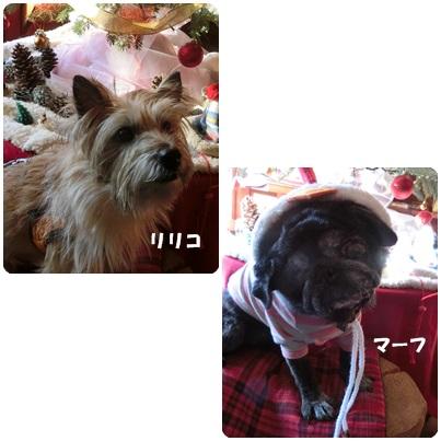 2016-12-23.jpg