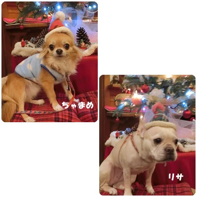 2016-12-29.jpg