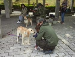 鏡山公園でアコーディオン20161030-3