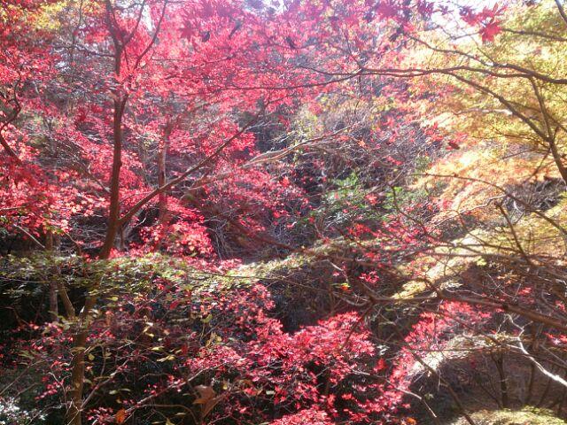16紅葉神戸森林5