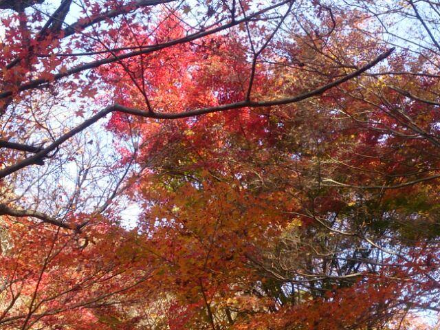 16紅葉神戸森林6