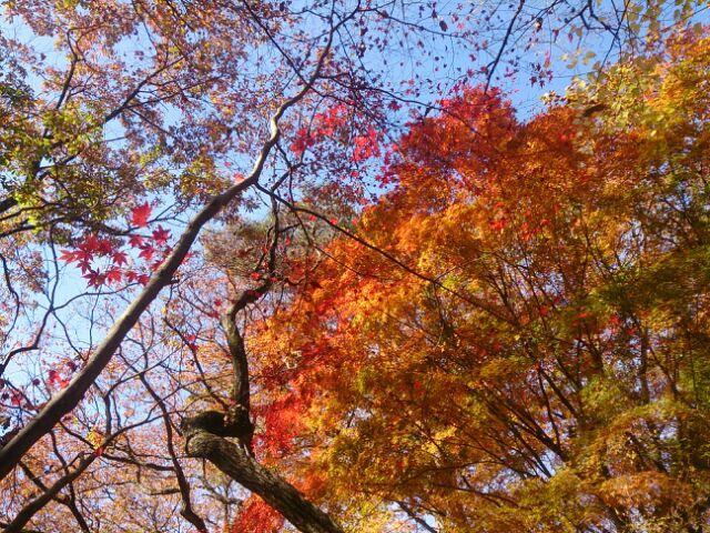 16紅葉神戸森林3