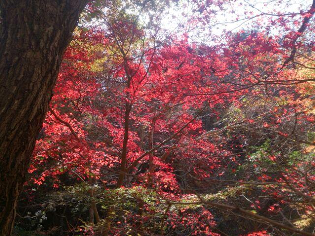 16紅葉神戸森林4