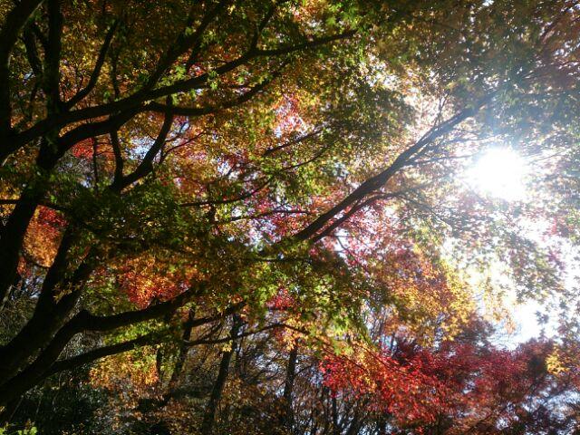 16 紅葉神戸森林1