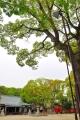 原田神社8