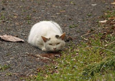 198棲みついた猫