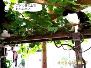 ブドウ棚の上でにらみ合い