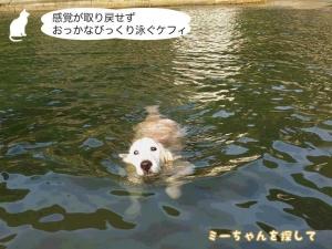 感覚が取り戻せずおっかなびっくり泳ぐケフィ