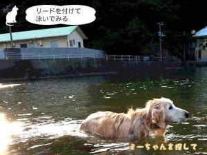 リードを付 けて泳いでみる