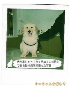 我が家にやってきて初めての検診先である動物病院で撮った写 真