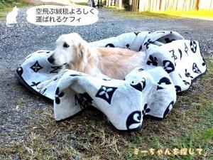 空飛ぶ絨毯よろしく運ばれるケフィ