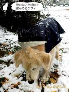 雪の匂いと感触を確かめるケフィ