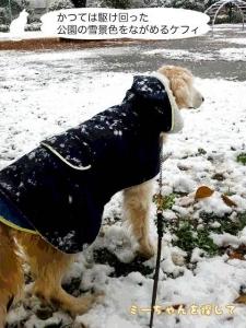 かつては駆け回った公園の雪景色をながめるケフィ