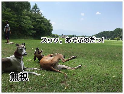 20160806-17.jpg