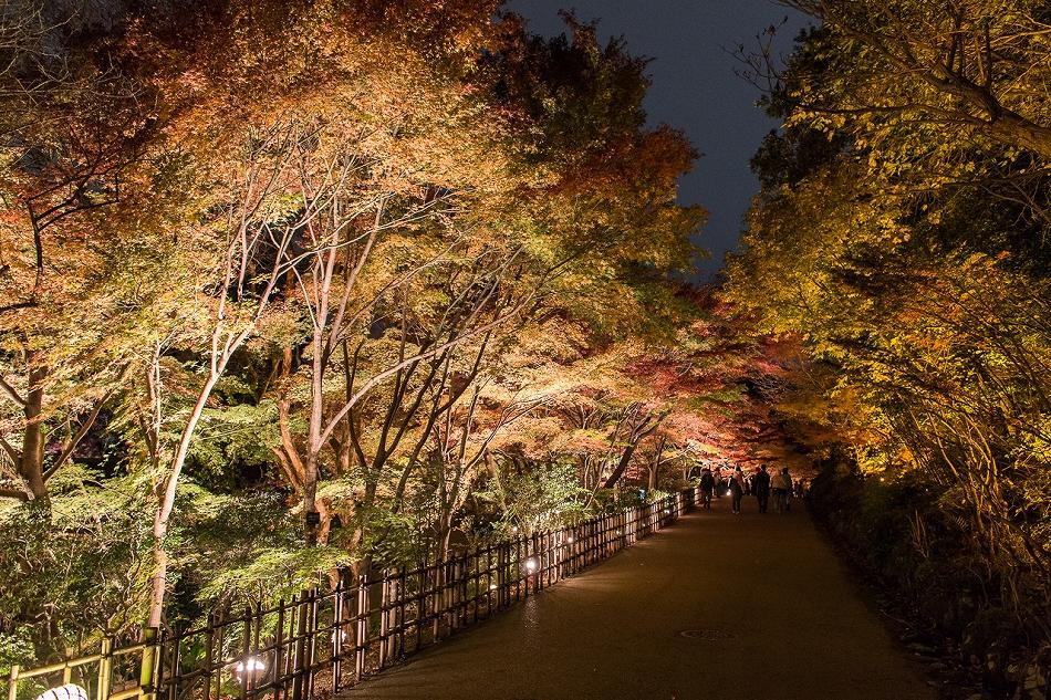 東山ライトアップ-24