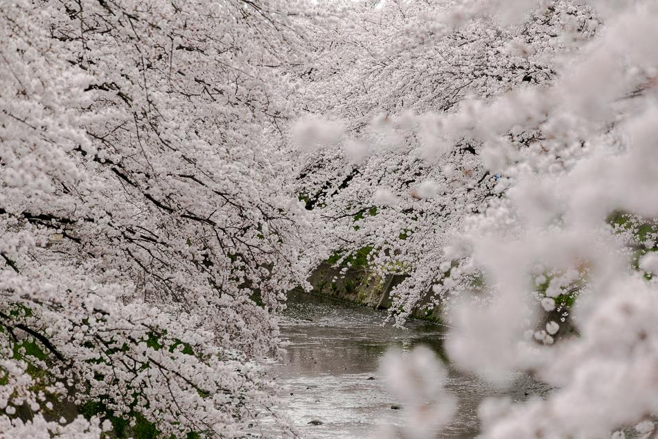 iwakura-3.jpg