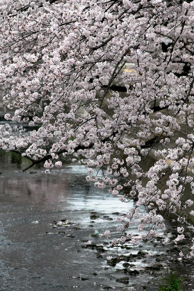 iwakura-6.jpg