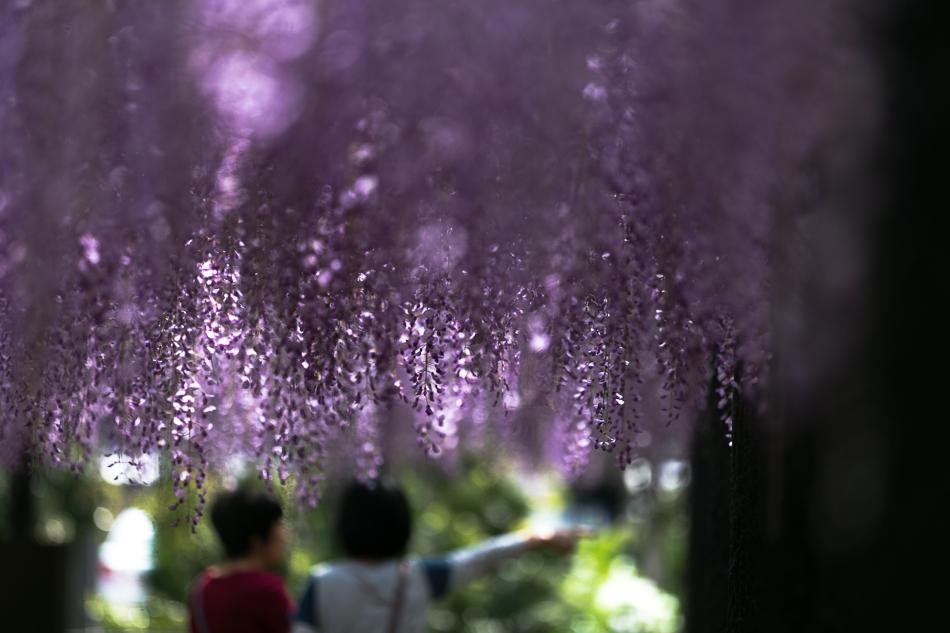 iwatafuji-17.jpg