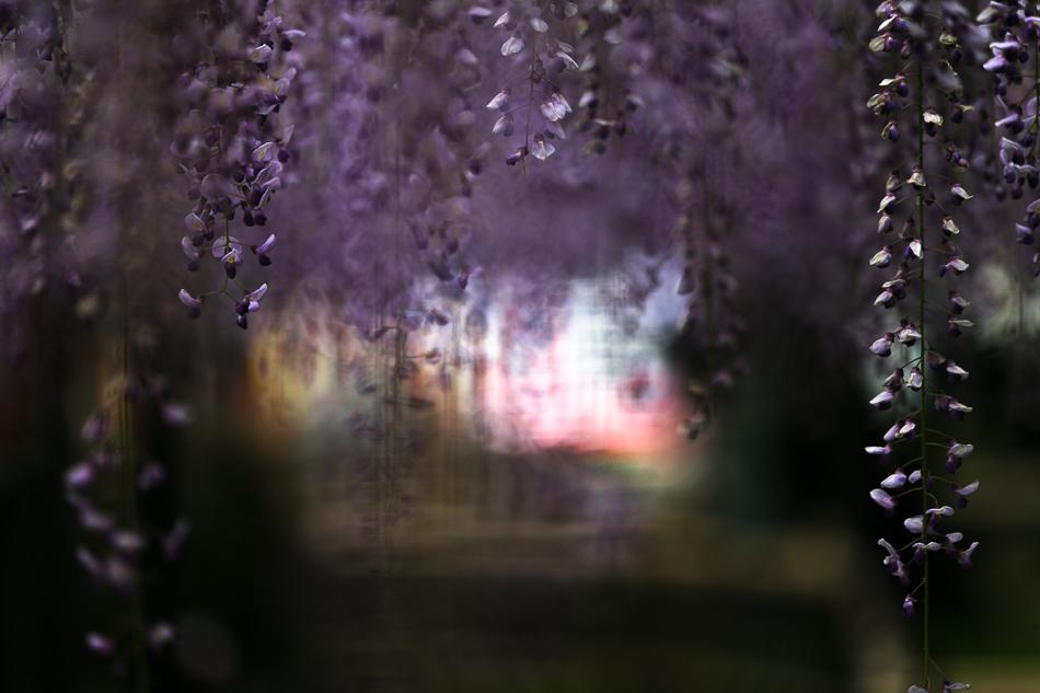 iwatafuji-3.jpg