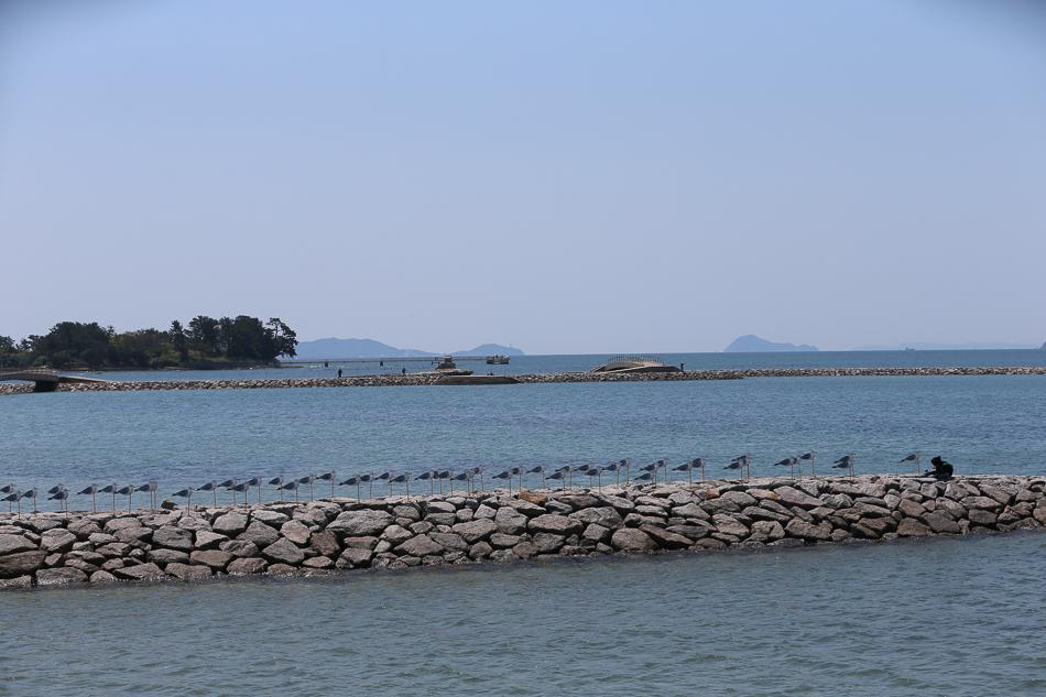 sakushima-7.jpg