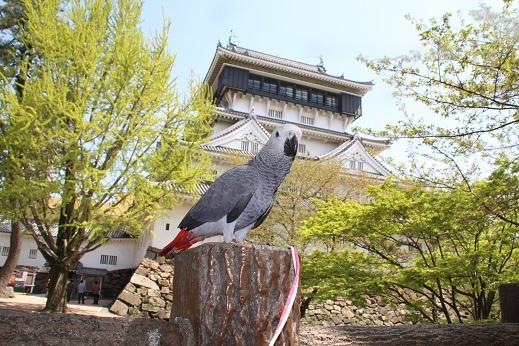 小倉城 2016-4-15-4