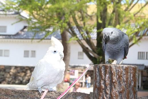 小倉城 2016-4-15-8