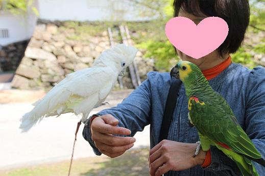 小倉城 2016-4-15-10