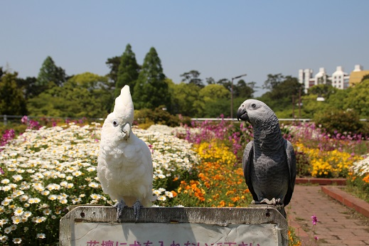 勝山公園 2016-4-30-4