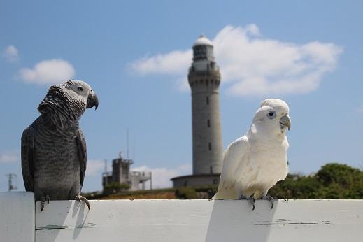 角島5 2016-4-29-3